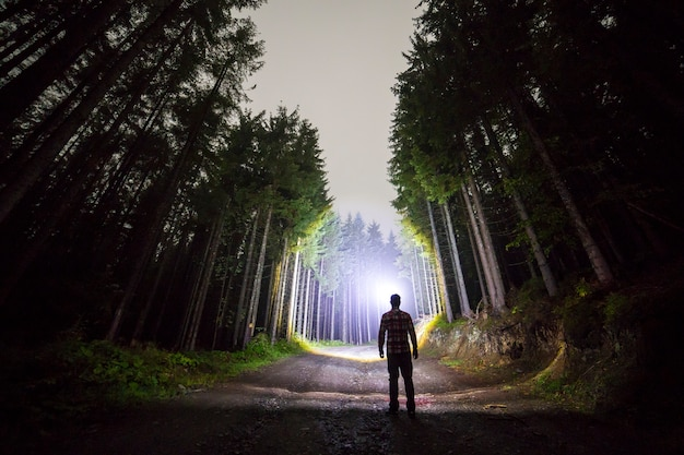 Back view of man with head flashlight standing on forest ground road among tall brightly illuminated spruce trees