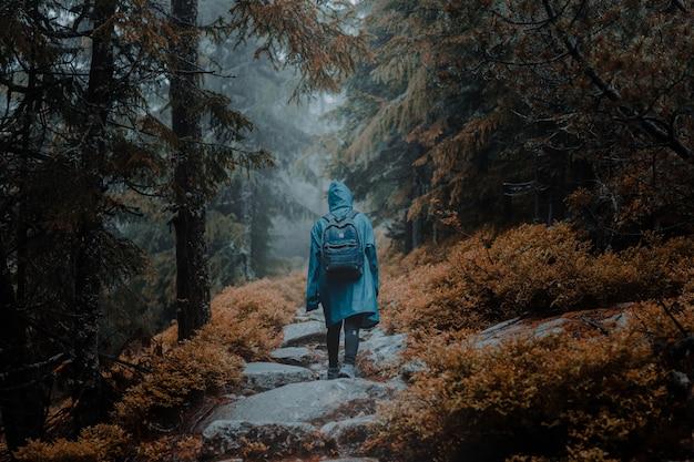 秋の森の岩だらけの小道を歩いているレインコートのバックパッカーの背面図