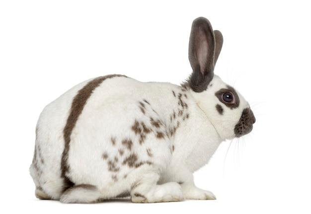 흰색 표면에 고립 된 검은 불 토끼의 뒷면