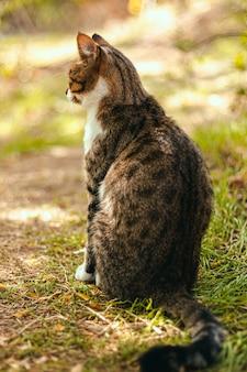 夏の草の上に座っている大人のぶち茶色の猫の背面図