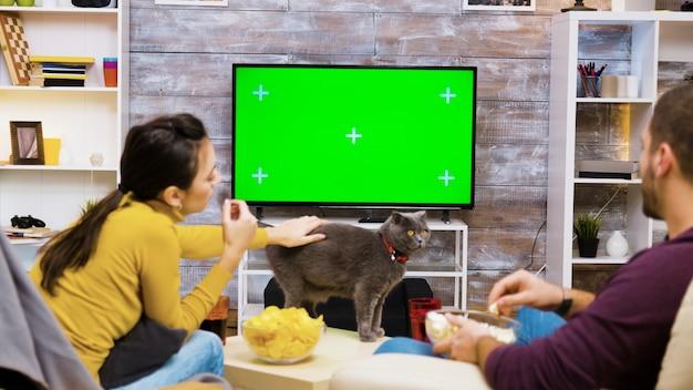 Вид сзади кавказской пары, едящей нездоровую пищу, сидя на стульях перед телевизором с зеленым экраном и играя с кошкой.