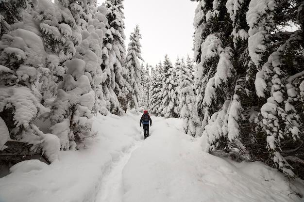 키가 진한 녹색 가문비 나무와 산 숲에서 밝은 서리가 내린 겨울 날에 흰색 깨끗한 깊은 눈 속에서 걷는 배낭 여행자 등산객의 다시보기.