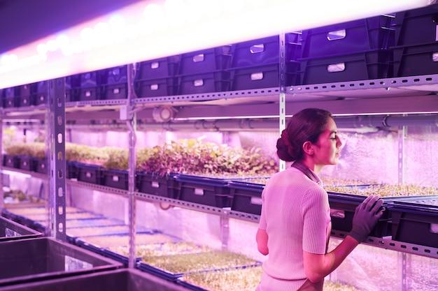 紫外線、コピースペースに照らされた保育園の温室に立っている間、芽トレイ上の植物を調べる若い女性労働者の背面図の肖像画