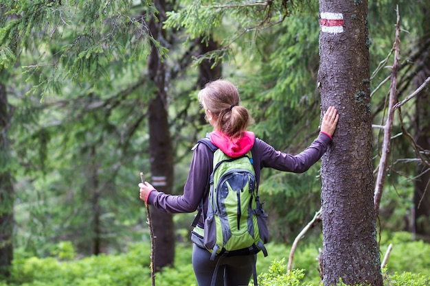 Back view of slim tourist hiker girl with stick and backpack holding hand on pine tree trunk with way sign in lit by sun mountain forest. tourism, traveling, hiking and healthy lifestyle concept.
