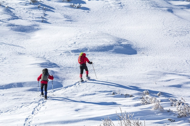 Back view of two tourist hikers with backpacks and hiking poles ascending snowy mountain slope on sunny winter day on white snow copy space wall. extreme sport, recreation, winter holidays.