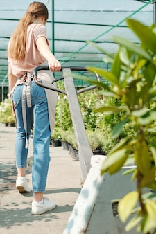 Back view of young female farmer or worker of greenhouse in workwear pulling cart with green plants or seedlings while moving along aisle