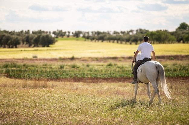 Back view of young male riding white horse in grassy meadow on cloudy day in countryside