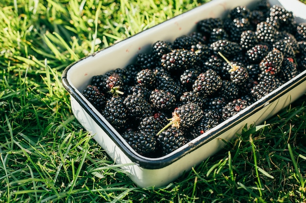 Backberrys in a metal bowl