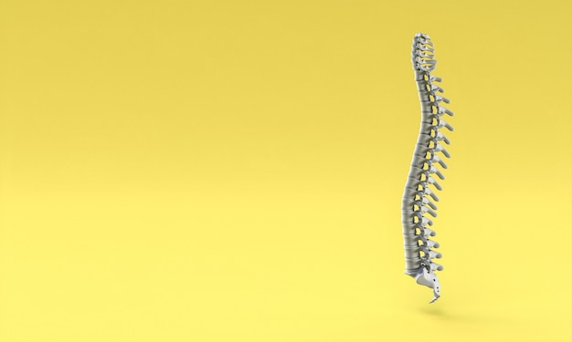 Backbone on yellow background. 3d render.