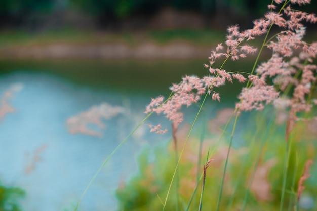 Розовая трава на размытие backfround