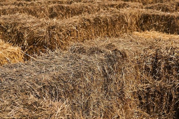 Фон - фрагмент лабиринта из штабелированных тюков сена.