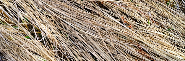 Background of a aged dry straw withered heap of grass.