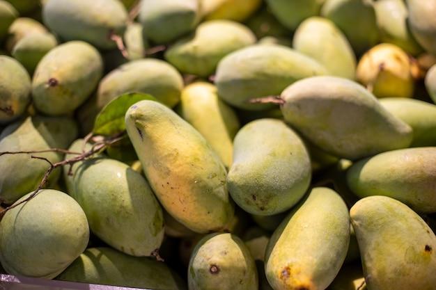 Фоновое и текстурированное множество зеленых манго собирают. форма пухлости с изогнутым сплошным конусом. тайские фрукты вкусные и в изобилии повсюду.