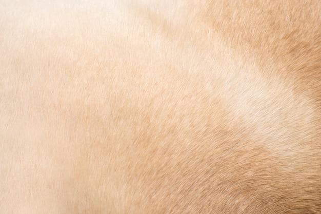 Background of animal hair