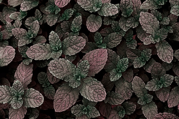 Background of artificially colored mint leaves