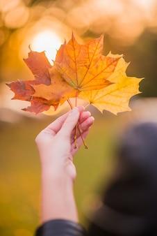 黄色の葉を手に持つ秋の晴れた背景に葉。手は黄色いメープルの葉を保持し、ぼんやりした秋の木background.autumn concept.selective focus。