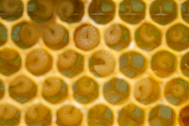 Background of bee honeycombs with larvae in a hive