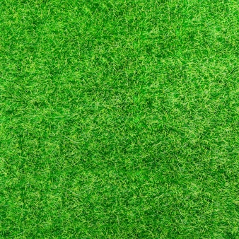 Background of bright green grass
