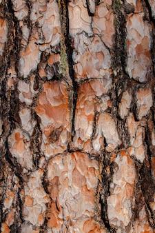 Background brown pine tree bark close up