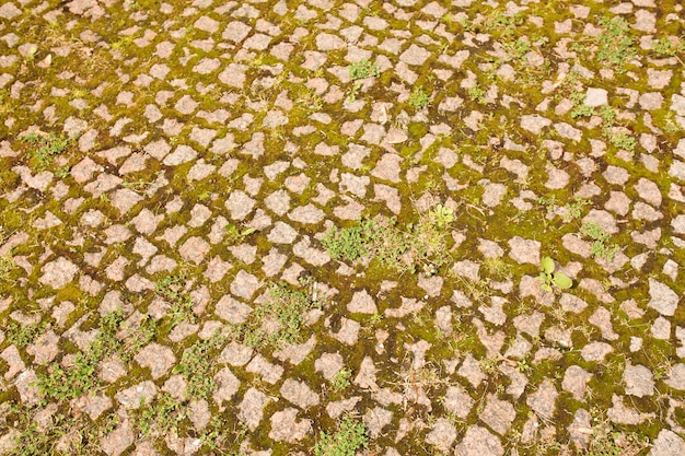 Background of cobbles with grass in the city center with light of sun