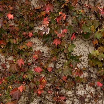 Background of concrete wall with vegetation