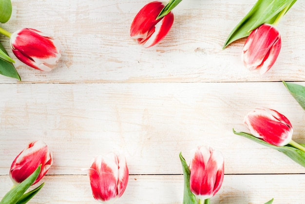 Background for congratulations, greeting cards. fresh spring tulips flowers