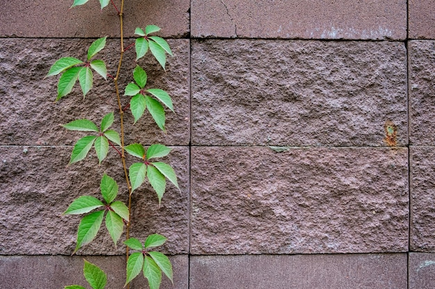Background of decorate sand stone wall surface.