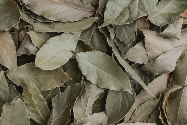 Background of dried bay leaf, lots of dried green leaves