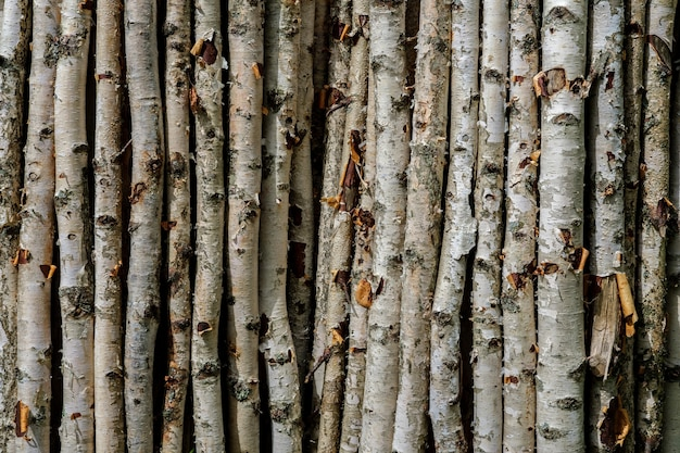 A background of dry and thin birch branches with twigs and in places torn off bark, lying vertically close to each other.