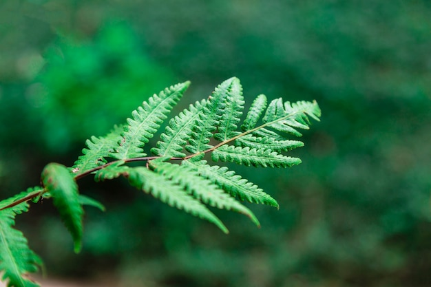 The background of fern leaves in the forest