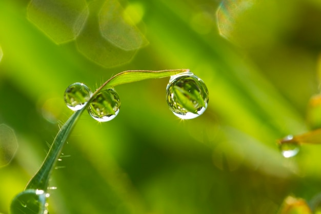 Background of a fresh green grass with water drops closeup