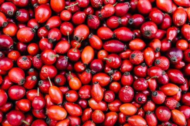 Фон свежесобранные красные плоды шиповника, свежие ягоды шиповника.