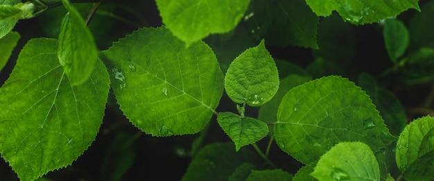 雨の後の森の植物と花からの背景。