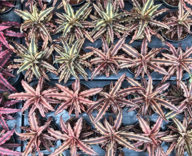 신선한 잎 텍스처에서 배경