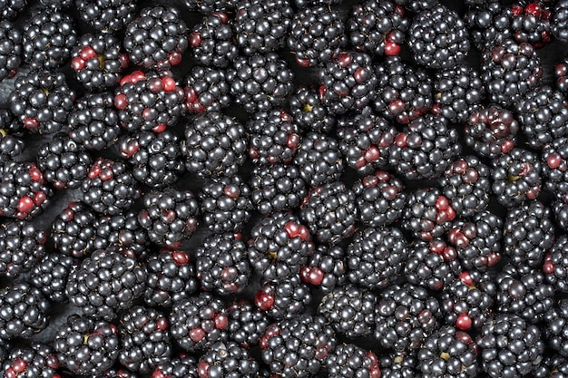 신선한 유기농 블랙베리의 배경을 닫습니다. 잘 익은 육즙이 많은 야생 과일 생 열매가 테이블에 놓여 있습니다. 평면도