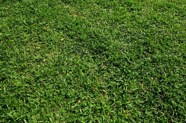 Фон из зеленой травы в парке.