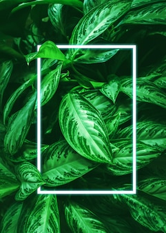 Background from green leaves of tropical plants and a neon frame. natural background. copy space. vertical frame.