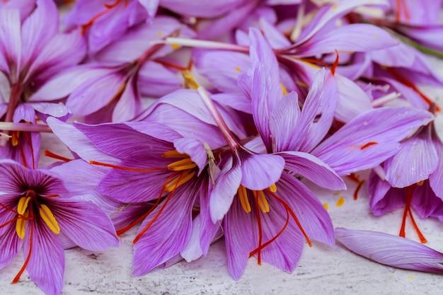 테이블에 사프란의 고른 꽃에서 배경. 가을에 피는 크로커스.