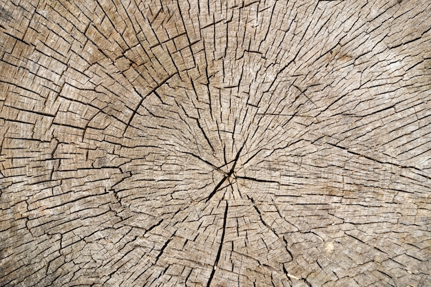 Background from saw cut tree trunk