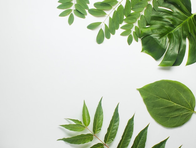흰 종이에 열 대 녹색 잎에서 배경입니다. 공간을 복사하십시오. 평면도