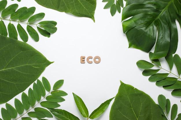 白い紙の上の熱帯緑の葉からの背景。エコという言葉。