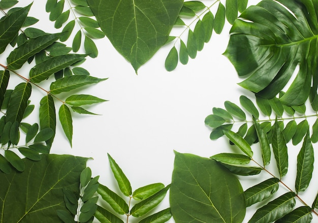 흰 종이에 열 대 녹색 잎에서 배경입니다.
