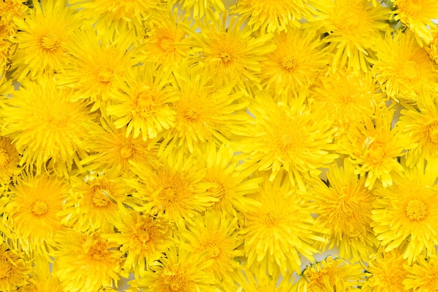 Background from yellow dandelions.