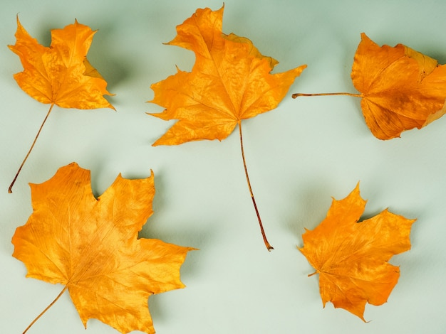 Background of gold colored leaves autumn concept