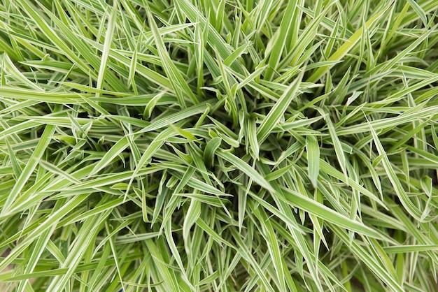 Задний план. трава зеленая и белая. вид сверху