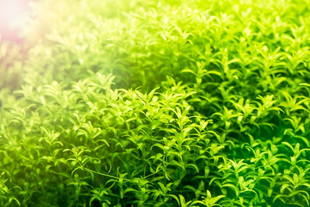 Background of green beautiful tropical freshwater aquarium selective focus