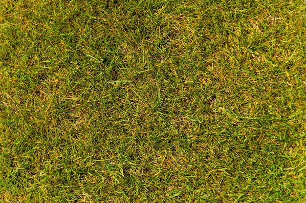 Background of the green grass. eco concept