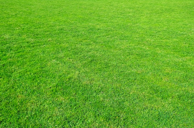 Background of green grass field. green grass pattern and texture. green lawn for background.