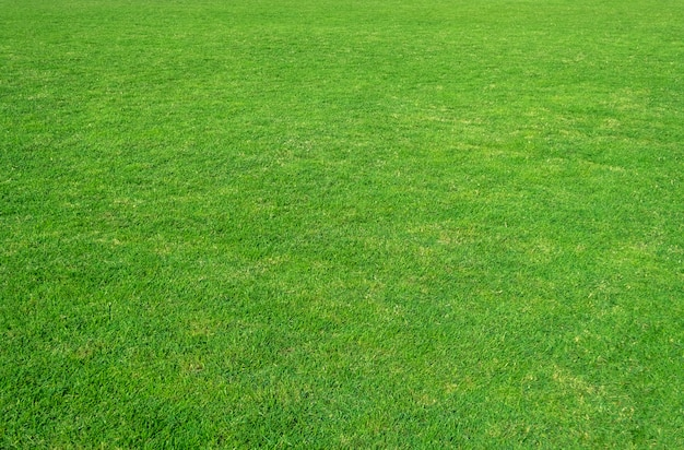 Background of green grass field. green grass pattern and texture.