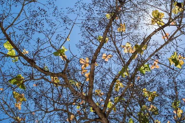 Background of green leaves tree with sunlight